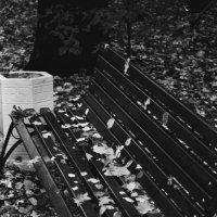 Листья. :: Яков Реймер