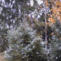 Первый снег :: Venera Shafigullina