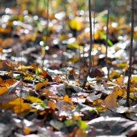 Осень хрустит под ногами... :: Олег Неугодников