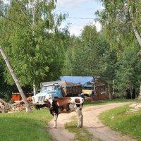 На сельской дороге... :: Asya Piskunova