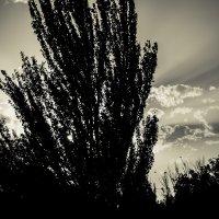 Дерево :: Nerses Davtyan