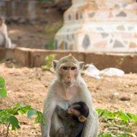 обезьянка ЧиЧиЧи :: Alexsei Melnikov