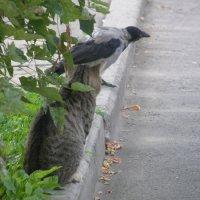 кот и ворона :: Элина Смирнова