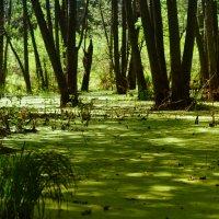 Марийские болота :: Venera Shafigullina