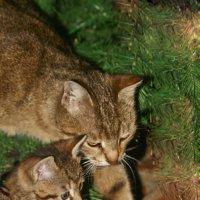 Кошка мать,и кошка дочь))) :: Игорь Кубай