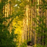 В волшебном лесу :: Наталья Буданова