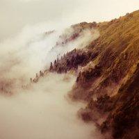 Исчезая в туманности леса :: Максим Гололобов