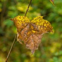 Осень заставляет быть философом. :: Сергей Исаенко