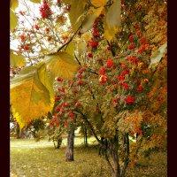autumn :: Lady Etoile
