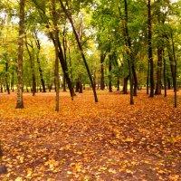 осень в парке :: valeriy g_g