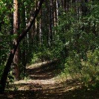 Лесная тропа... :: Валерия Калашникова