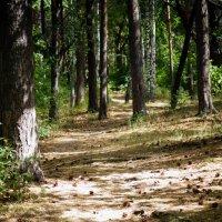 Тропинка в лес... :: Валерия Калашникова