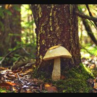 В лесу осеннем.... :: Елена Kазак