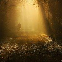Осеннее золото :: Олег Самотохин