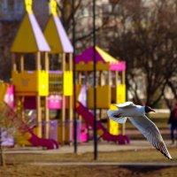 Спешащая чайка :) :: Юрий Куликов