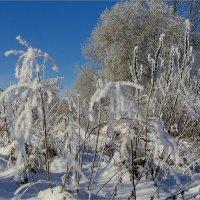 Морозный день :: Геннадий Худолеев