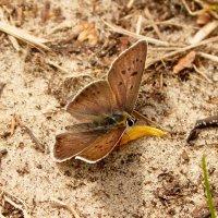 а теперь опять про бабочек 16 :: Александр Прокудин