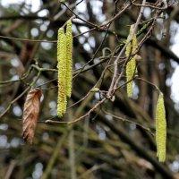Предвестник весны :: Heinz Thorns
