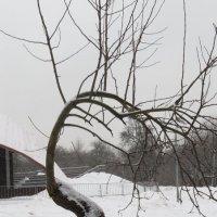 Январь.. :: Зинаида
