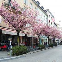 Весенний Цюрих Швейцария :: Alm Lana