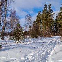 Солнце vs. Мороза # 6 :: Андрей Дворников