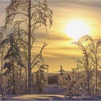 Пейзаж в контровом свете 2.... :: Владимир Чикота