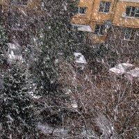 Снег пошёл :: Валерий Дворников