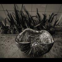 Кухня :: SanSan