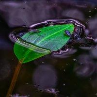 Территориальные воды :: Владимир Шамота