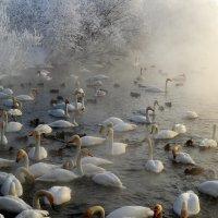Холодная птичья зимовка :: Татьяна Лютаева
