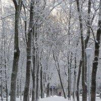 Зимние аллеи :: MarinaKiseleva