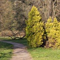 В весеннем парке :: Aнна Зарубина