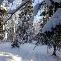 Лесные дороги.Февраль в нашем лесу. :: Жанна Викторовна