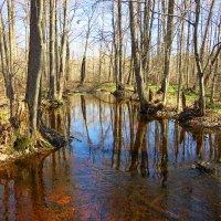 Бегут, бегут талые воды и лес торжественно пробуждается после долгой зимы :: Григорий охотник
