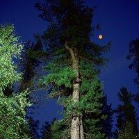 лунная, осенняя НОЧЬ :: Николай