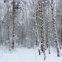Здесь все укрыто пушистым покрывалом и лишь редкие снежинки промелькнут перед твоим взором :: Григорий охотник