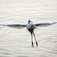 А мне летать охота... :: Vladimir Lisunov