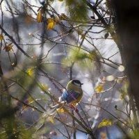 птичка-синичка :: Александр Довгий