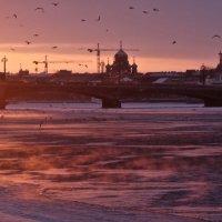 птицы и пар над Невой :: Елена