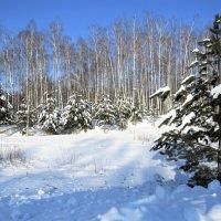 зимний лес :: НАТАЛЬЯ