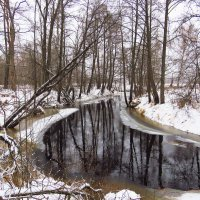 Хмурый холод и снег накрыл речку, которая оживляет застывшую рощу :: Григорий охотник