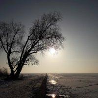 Солнце просыпалось на заливе... :: Красоты Балтики