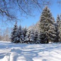 Белое время года :: Людмила Торварт