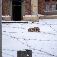 Собачья жизнь :: Игорь Чичиль