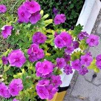 цветочное буйство :: Серж Поветкин