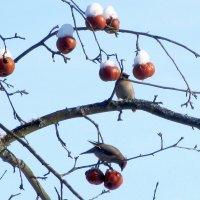 Птичья столовая :: Ольга Довженко