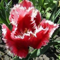 С весной вас...пока календарной... :: Galaelina ***