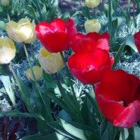 ...Неповторима каждая Весна,       какой бы ни была она по           счёту......... :: TAMARA КАДАНОВА