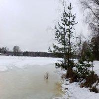 Оттепель.Река Оредеж. :: Жанна Викторовна