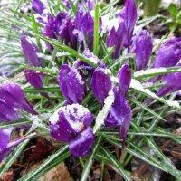 Весна!!! :: dli1953